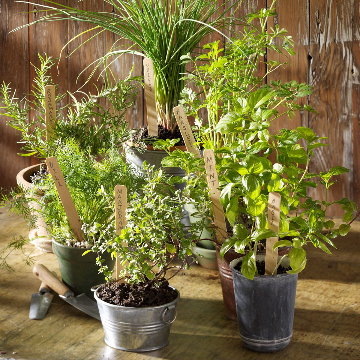 Top 10 Herbs for Your Kitchen Garden