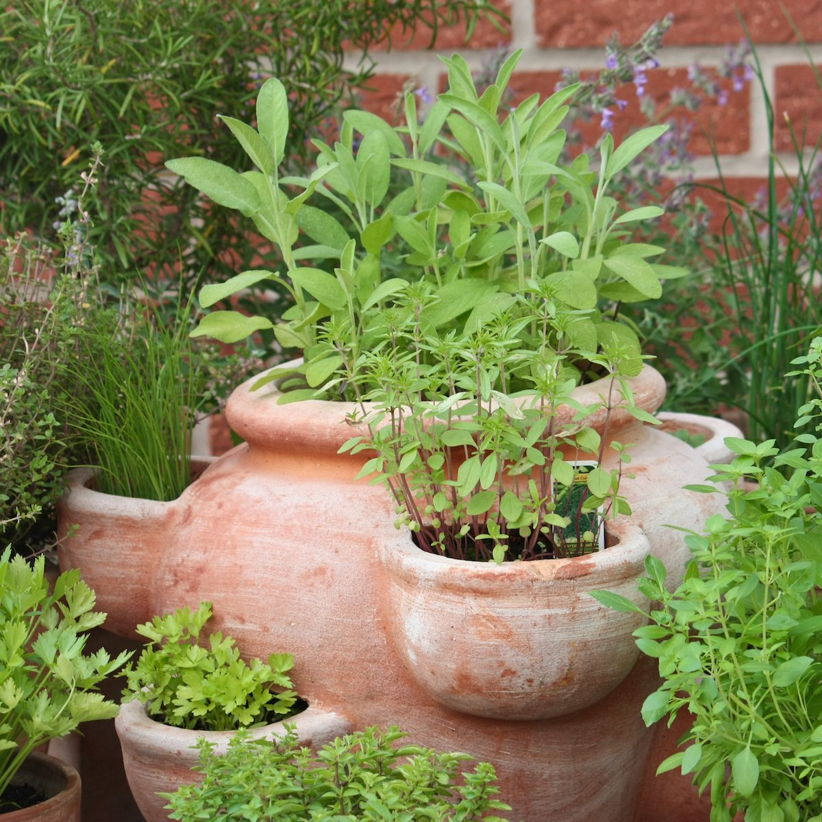 How to Dry Herbs | Taste of Home