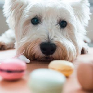 11 Summer Foods You Should Never Share with Your Dog