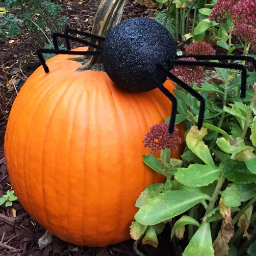 DIY Halloween decoration giant spider in the yard crawling over a pumpkin