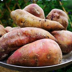 The Surprising Difference Between Sweet Potato and Yam
