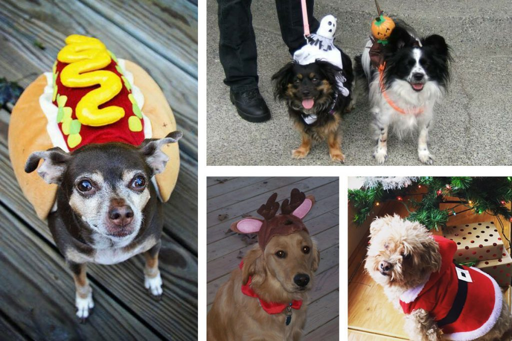 Collection of dogs in an array of costumes