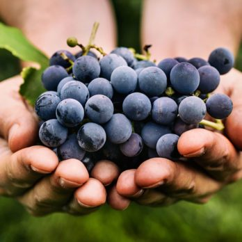 Our Guide to the Most Popular Grape Varieties for Eating