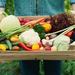 What's in Season? Here's How to Cook and Store Your Favorite Fall Produce