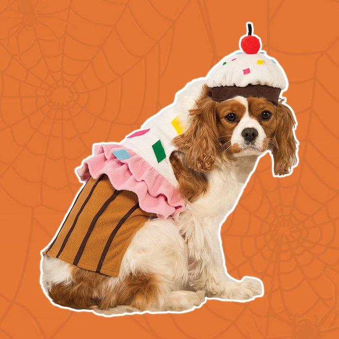 Cupcake puppy