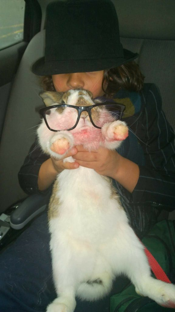 Brown and white bunny being held up and wearing oversized glasses