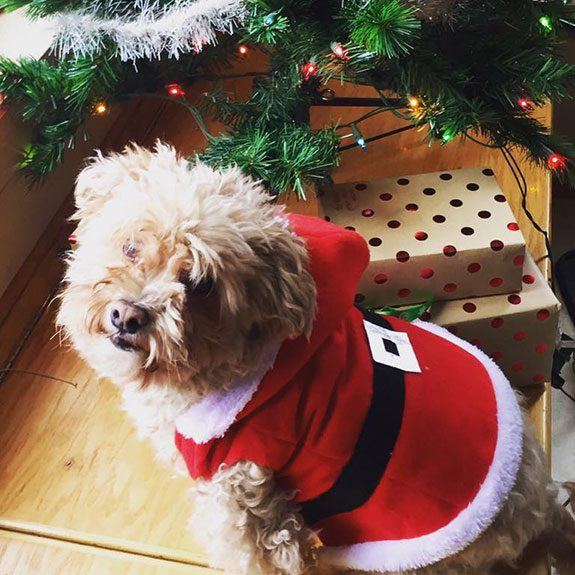 Tiny dog wearing a santa jacket in front of a Christmas tree