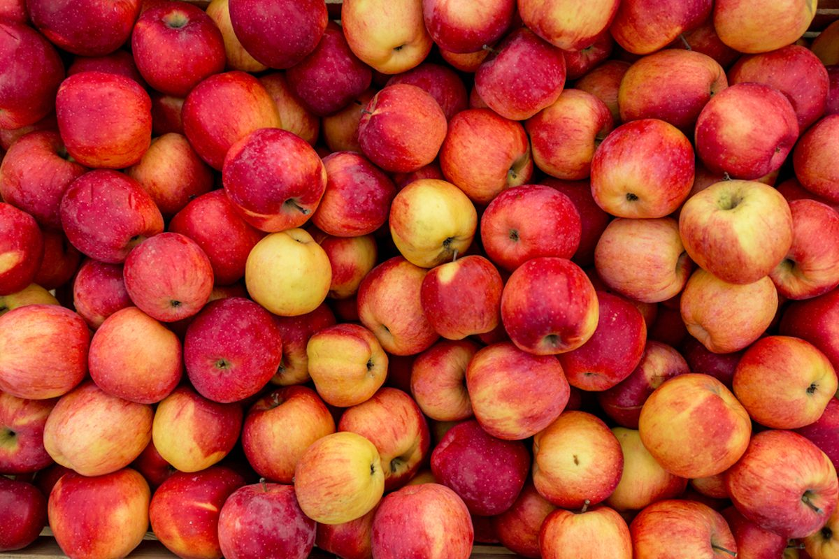 Closeup shot of fresh red and yellow apples;