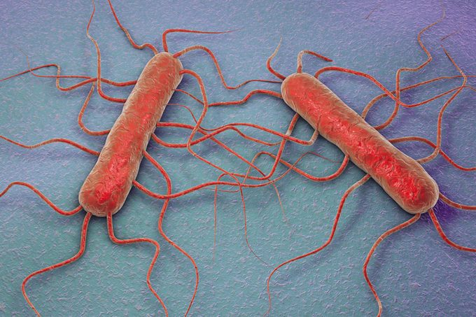 3D illustration of bacterium Listeria monocytogenes