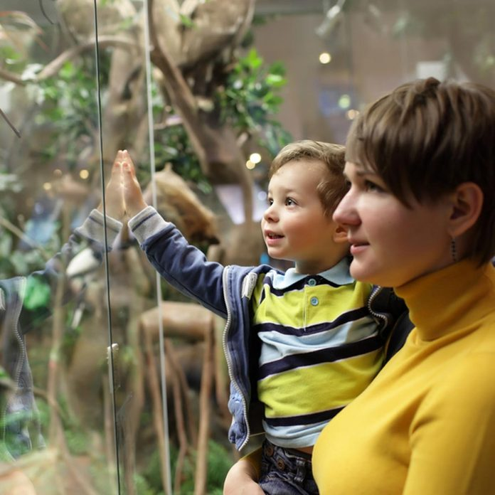 Family looking at wild animals in a museum; Shutterstock ID 202325503; Job (TFH, TOH, RD, BNB, CWM, CM): TOH