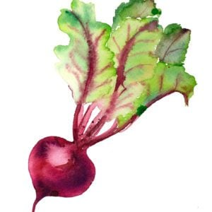 Beet watercolor