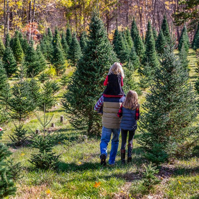 Father and Two Daughters Walking Through Christmas Tree Farm; Shutterstock ID 743807524; Job (TFH, TOH, RD, BNB, CWM, CM): TOH