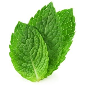 three fresh mint leaves isolated on white background.