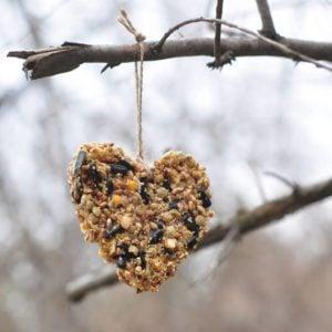Heart-shaped bird feeder