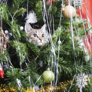 Cat on Christmas tree.