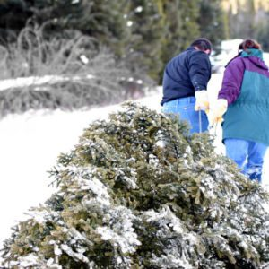 couple pulling Christmas tree out of the forest