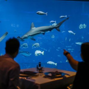 A diner points towards a hammerhead shark as it swims past at the Ocean Restaurant by Cat Cora in the SEA Aquarium at the Resorts World Sentosa