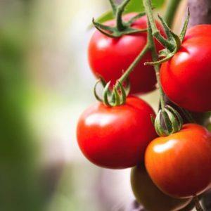 Let's Settle the Tomato Fruit vs. Vegetable Debate (Maybe)