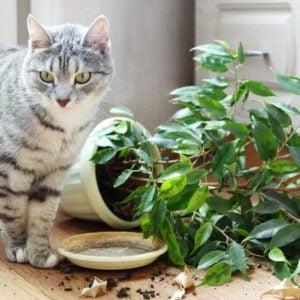 Cat dropped houseplant; plants; cats; lemons