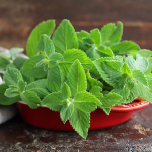 Fresh green mint leaves in a bowl