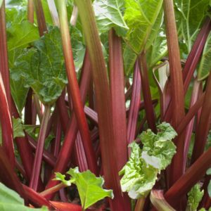 6 Surprising Ways to Love Rhubarb All Year
