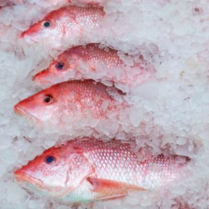 row of red snapper catch in ice