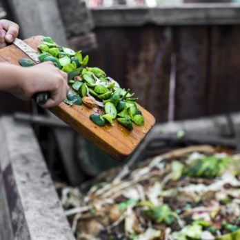 Go Green with Our 8 Composting Tips