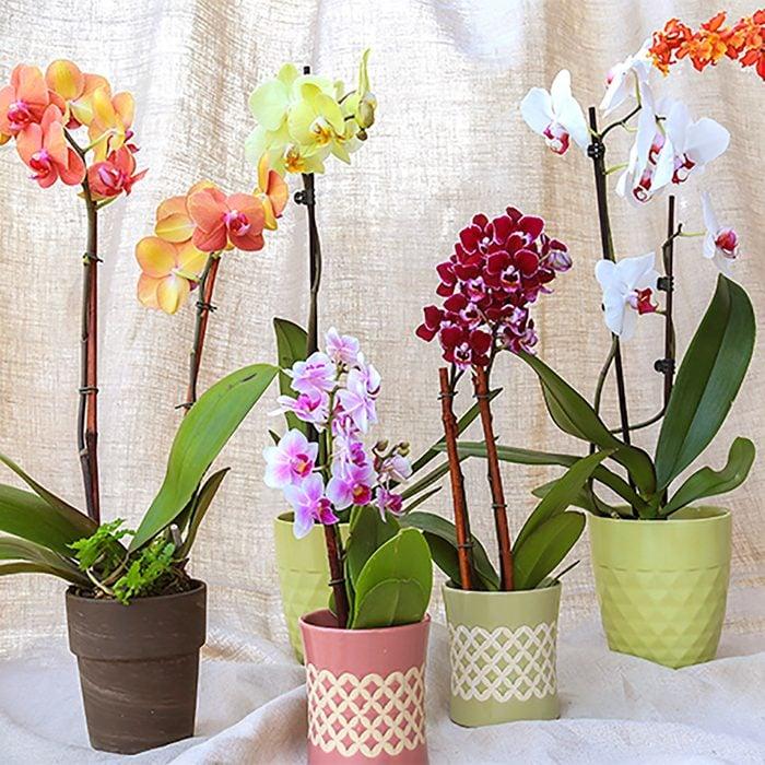 Trader Joe's orchids.