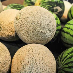 melons on display shelf at the supremarket