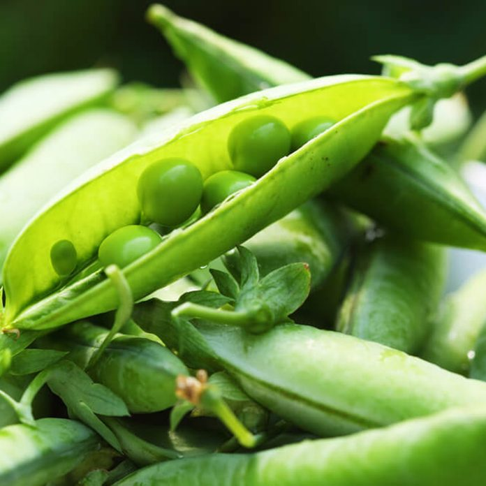 Close-up of peas