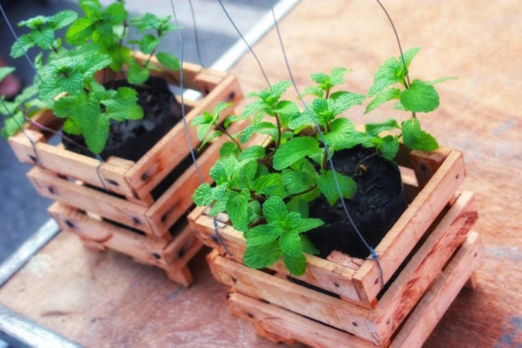 two small wooden planters with plants