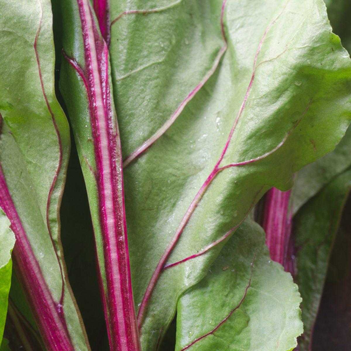 closeup to fresh beet leaves