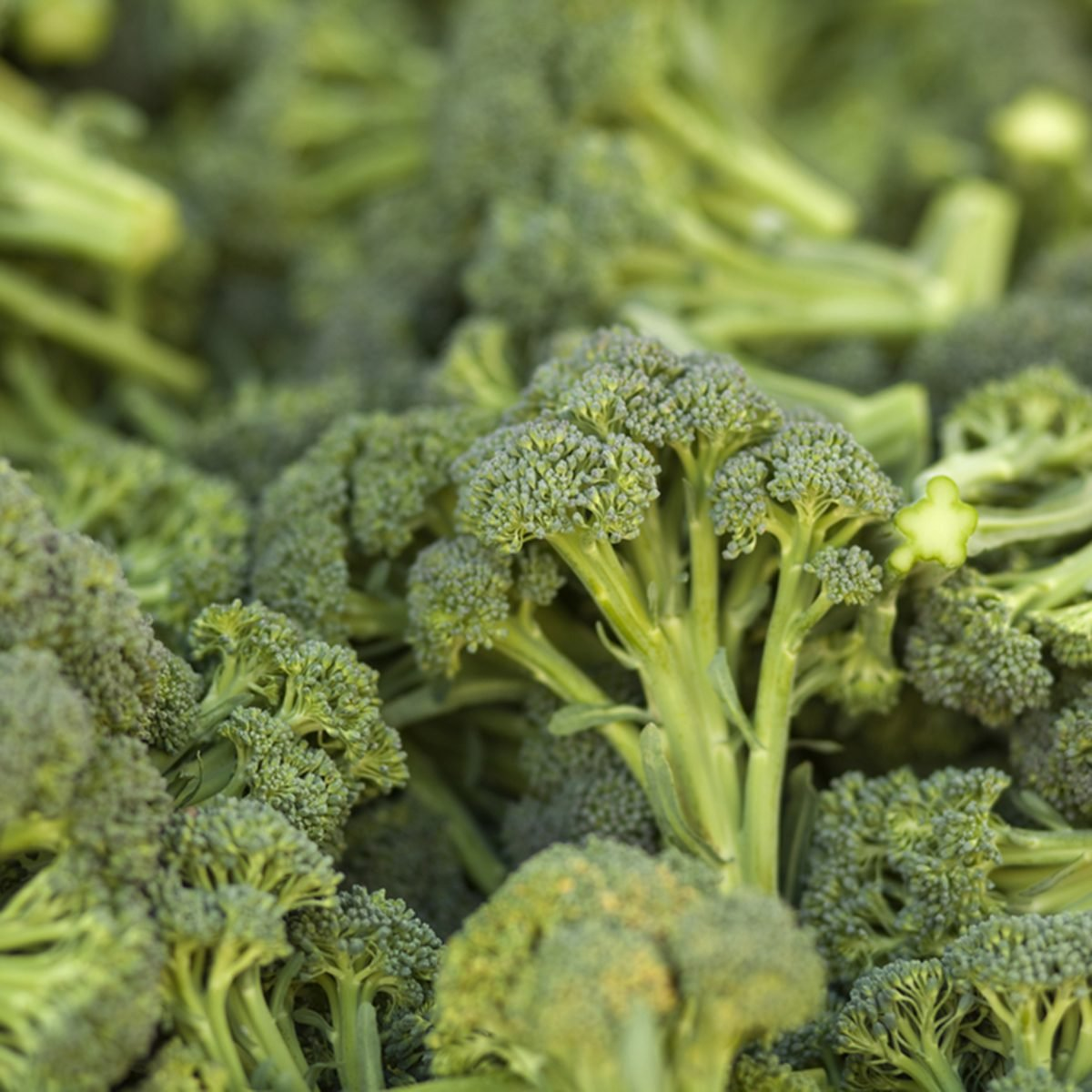A pile of broccoli stalks at a market.