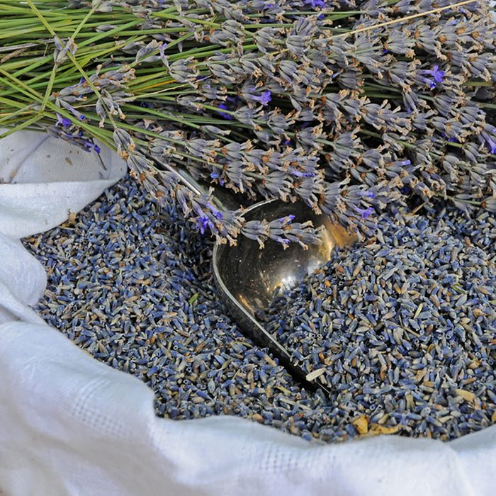 dried french lavender flowers on lavender farm in Provence, France; Shutterstock ID 87027971; Job (TFH, TOH, RD, BNB, CWM, CM): Taste of Home