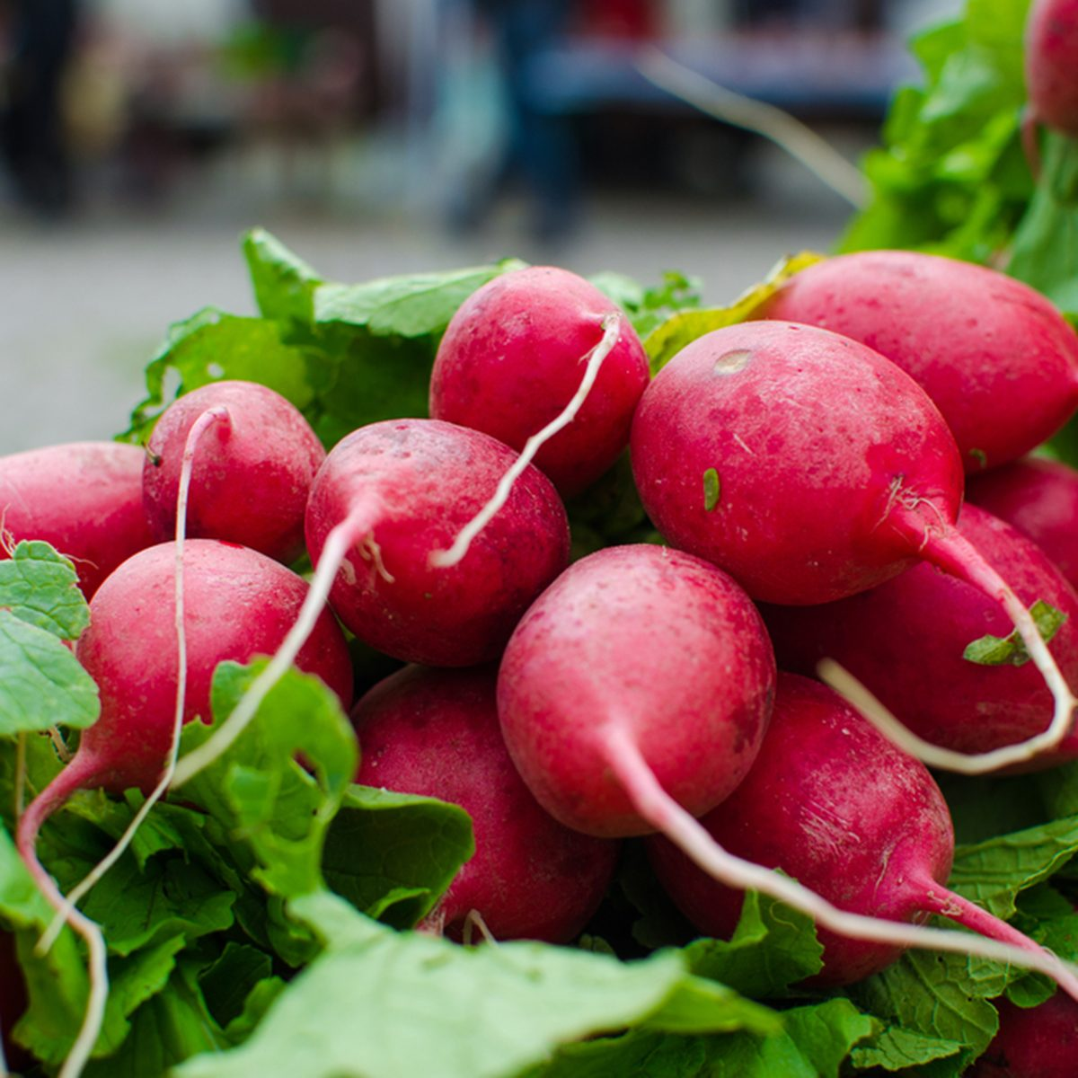 fresh radishes with leaves