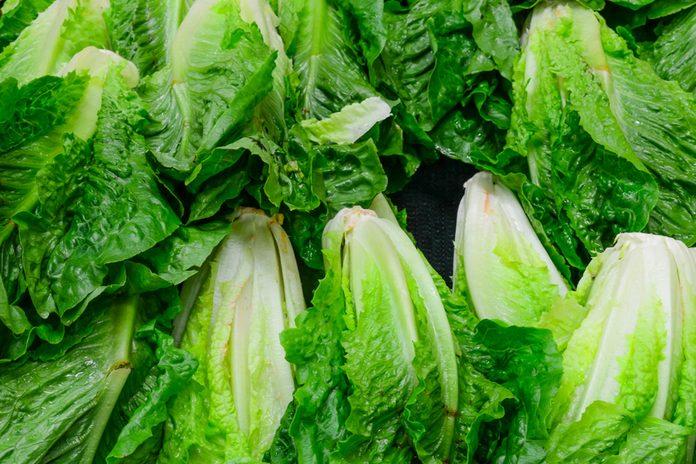 Group of fresh organically grown fresh romaine lettuce in the farmer market