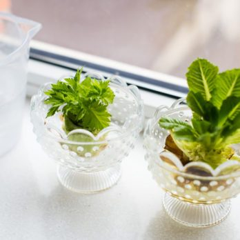 How to Re-Grow Celery From Scraps