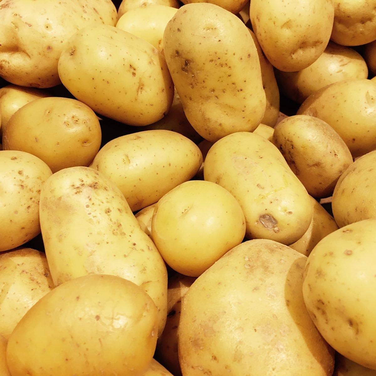 Fresh organic potato stand out among many large background potatos in the market. Heap of potatos root. Close-up potatos texture. Macro potato