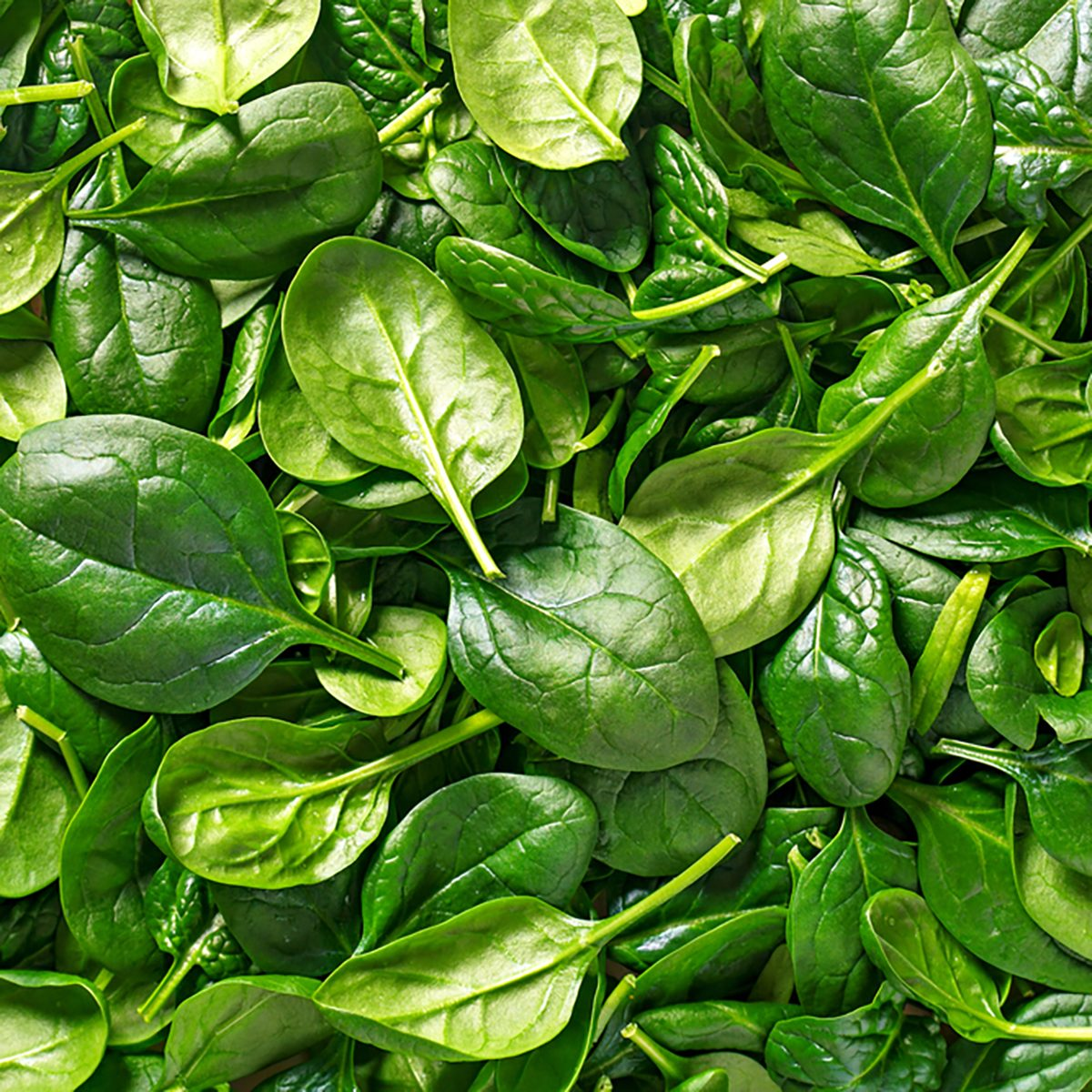 Spinach background full image