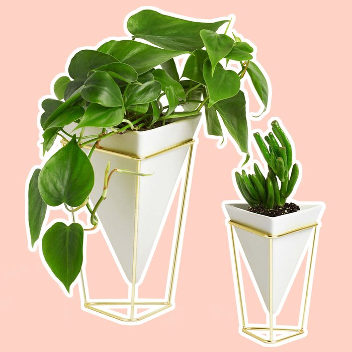 Umbra Trigg Desktop Planter Vase & Geometric Container - Great For Succulent Plants, Air Plant, Mini Cactus, Faux Plants and More, White Ceramic/Brass (Set of 2)