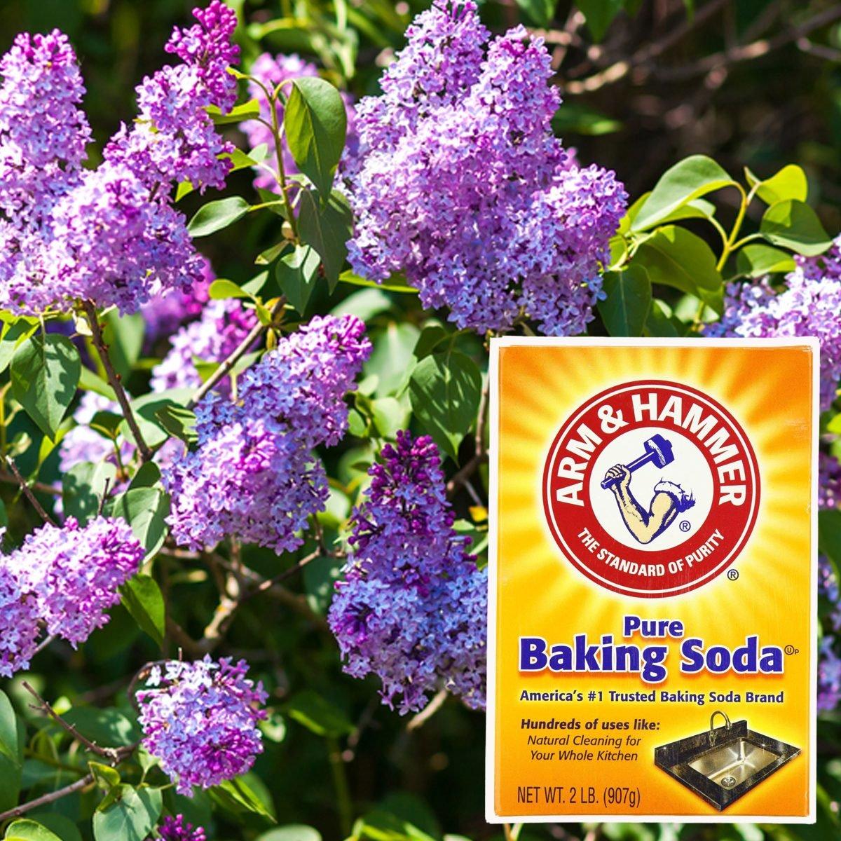 10 Secret Ingredients That Can Help Your Garden Grow