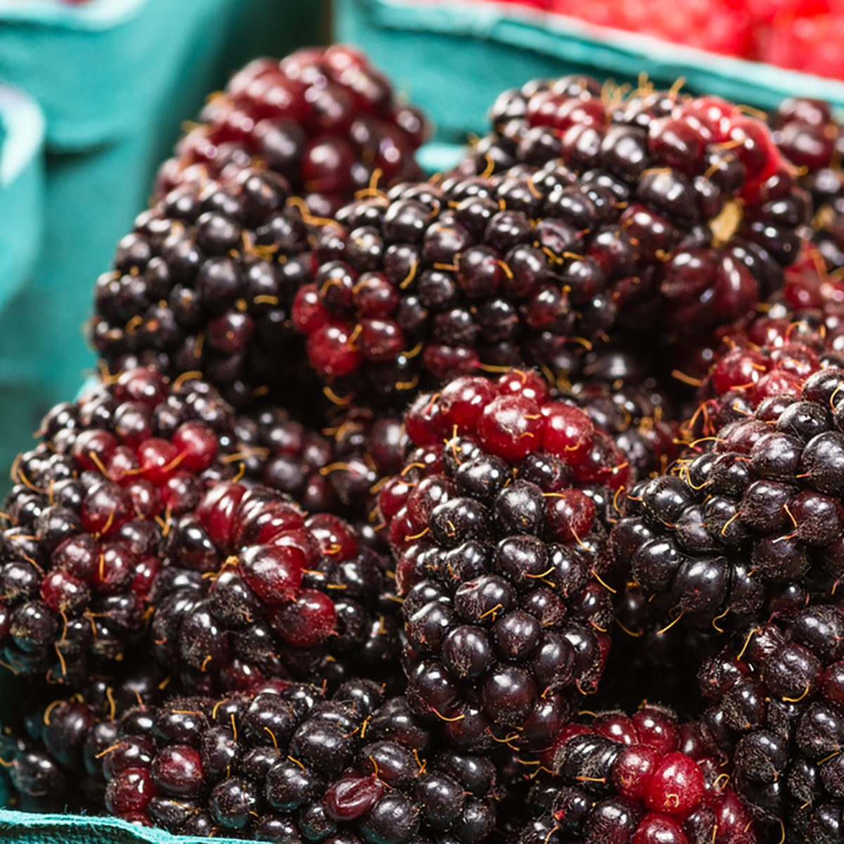 A basket of fresh Marionberries on display at the market