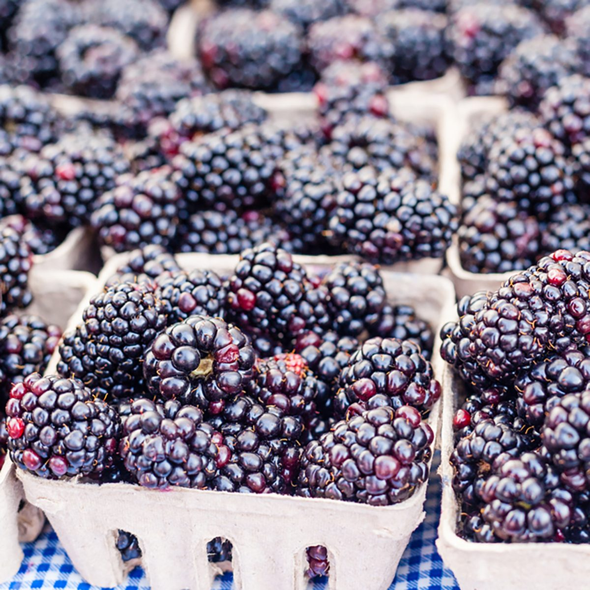 Boxes of organic blackberries for sale at local farmers market.