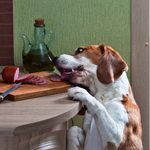 9 Quick, Easy Ways to Pet-Proof Your Home