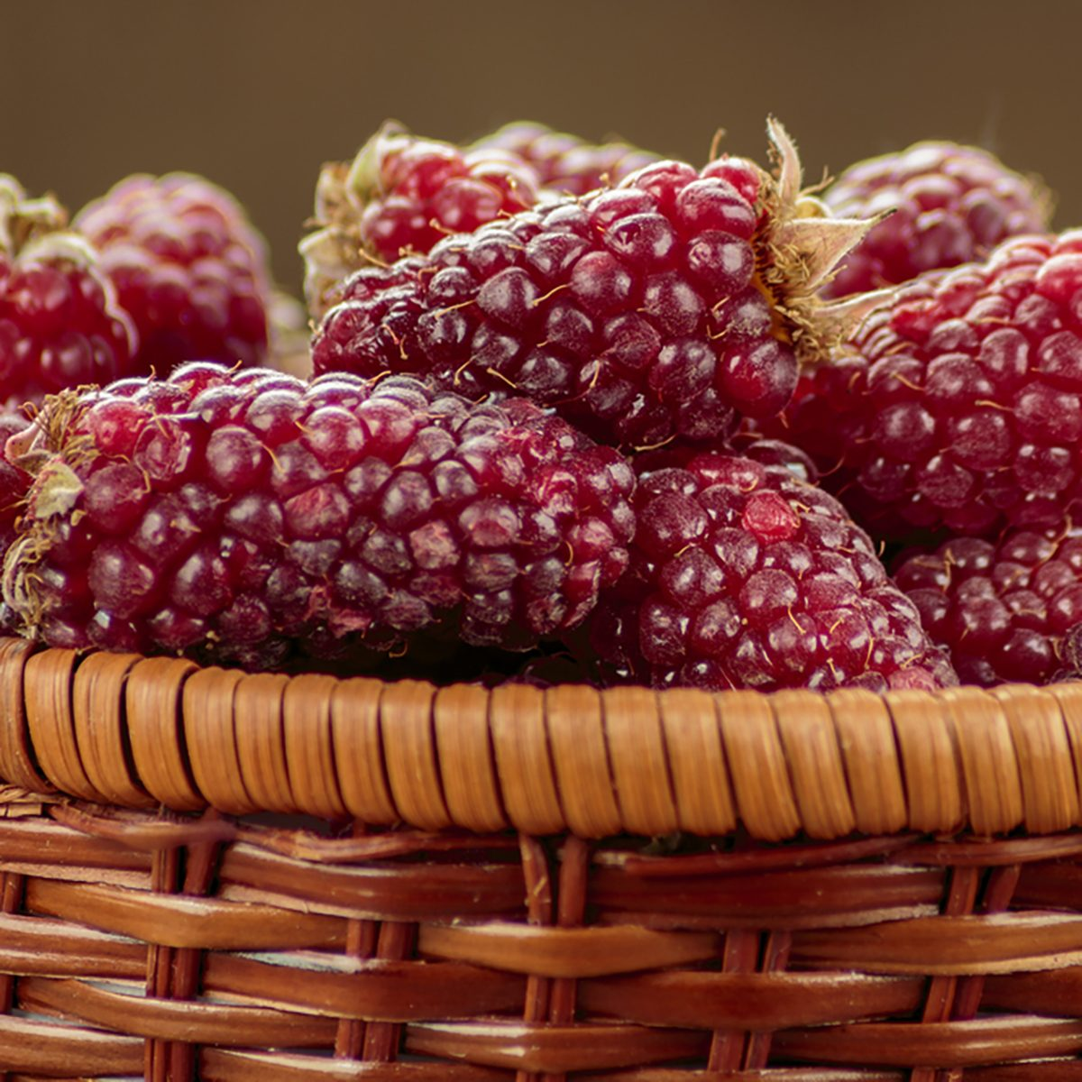 Tayberry a hybrid of raspberries and blackberries in wicker basket