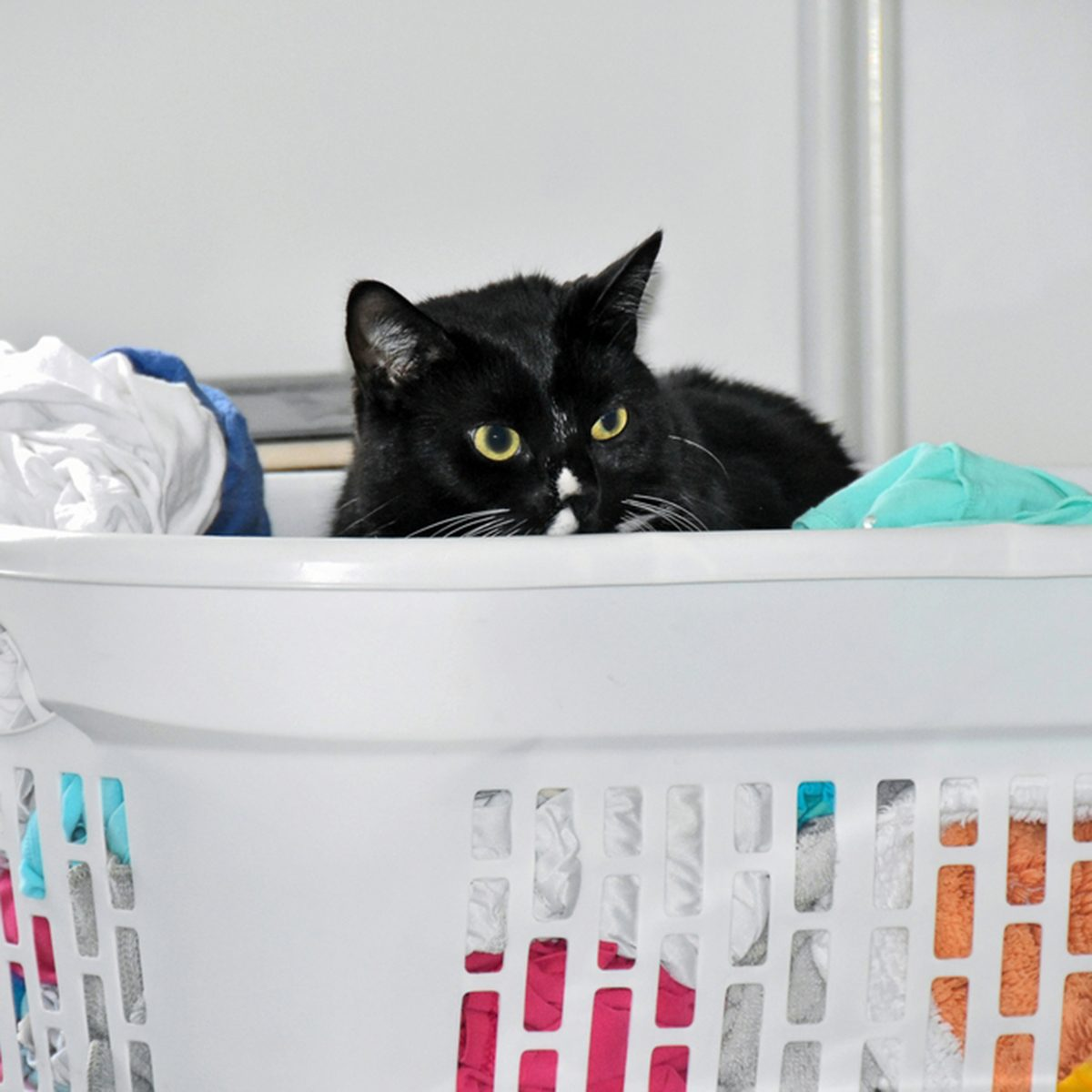 black cat in white laundry basket with clean clothing