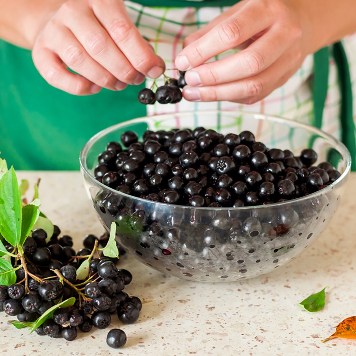 A Woman Picking Chokeberries (Aronia) off the Twig in the Kitchen
