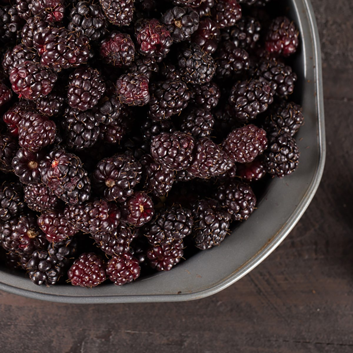 Harvested Boysenberries in silver tin container above shot on dark wooden background