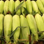 How to Pick the Best Sweet Corn