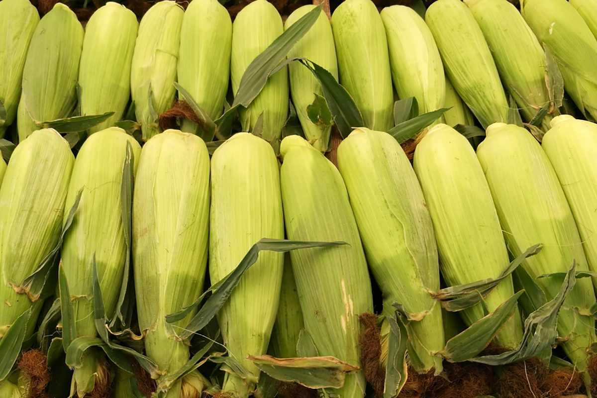 Close up of fresh corns in the local market